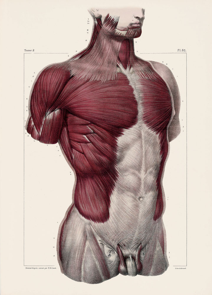 Illustrati Atlas Of Human Anatomy And Surgery