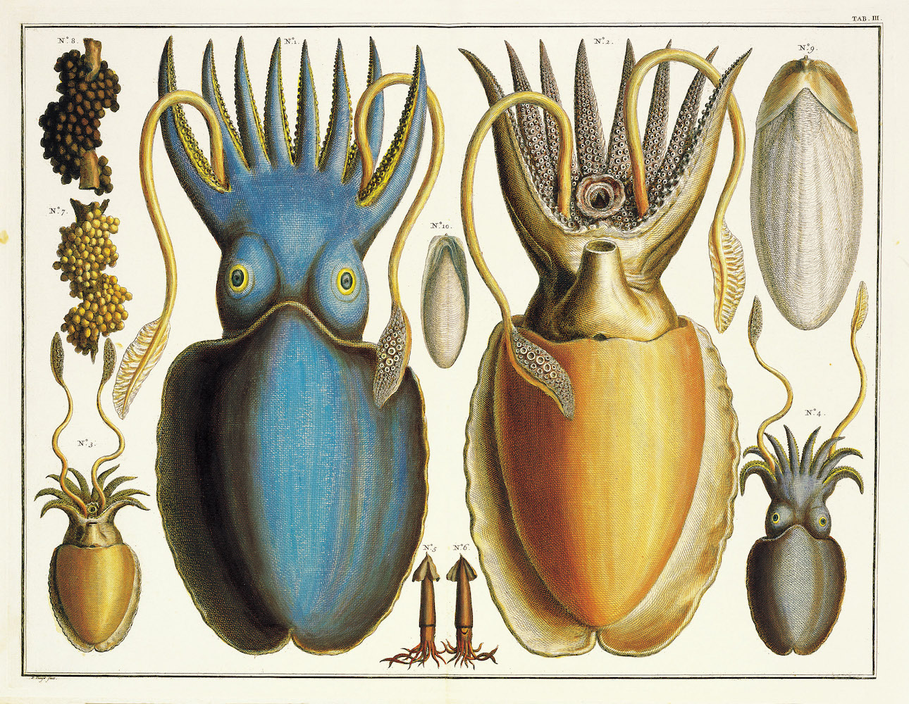 ILLUSTRATI | Albertus Seba's Cabinet of Natural Curiosities
